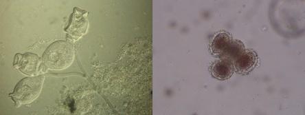 microscopia01