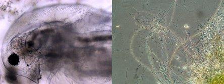 microscopia02